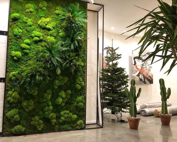 мох плоский и растенияJPG